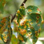 Diagnosing and Identifying Plant Disorders & Tree Assessment and Risk Management