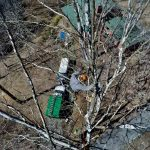 Tree Preservation & Tree Support