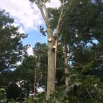 Emergency Tree Removal / Hazardous Tree Removal / Storm Restoration