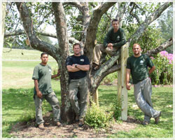 ArborCare Tree Service, Inc