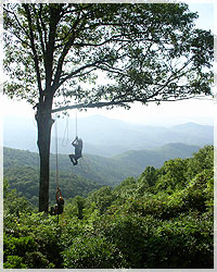 ArborCare Tree Service, Inc.