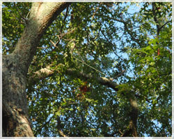 Boone NC Tree Service