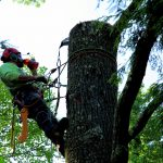 Tree Removal Service in NC